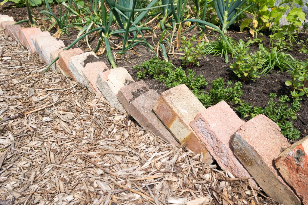 Bricks used as an edging to a raised bed on an allotment